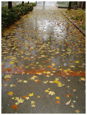 sodden_path_by_lamenta3